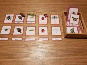 Kukaiņi (Rimi)