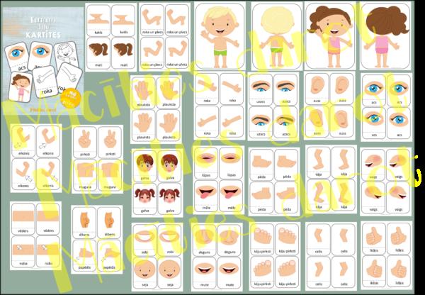 Ķermeņa daļu kartītes