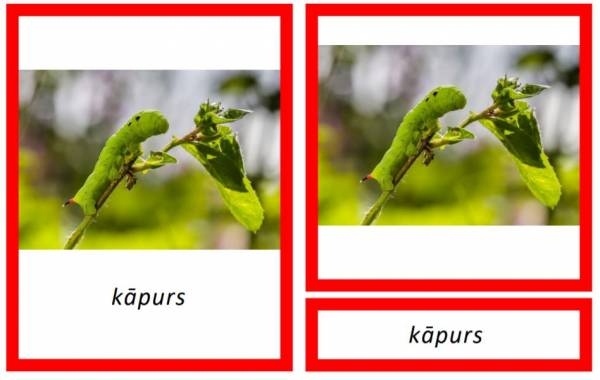 Kukaiņi – Safari Toobs kolekcija