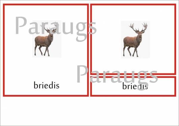 Meža dzīvnieki – definīciju grāmatiņa