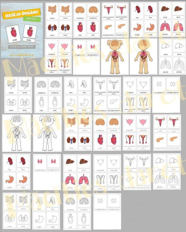 Iekšējo orgānu kartītes