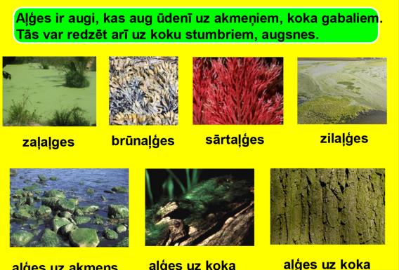 Augu daudzveidība