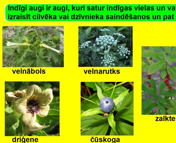 Indīgi, aizsargājami un ārstniecības augi