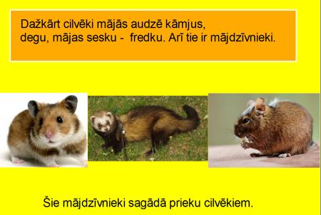 Mājdzīvnieki