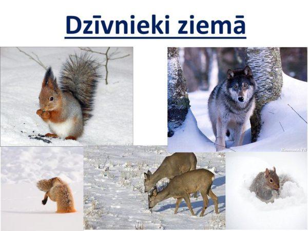 Augi un dzīvnieki ziemā.