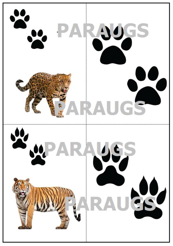 Darba lapas un kartītes – Dzīvnieku pēdu nospiedumi