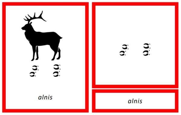 Dzīvnieku pēdas – 3 dažādi fonti par 1 cenu