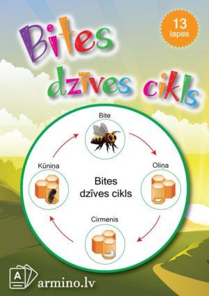 Aktivitāšu krājums Bites dzīves cikls