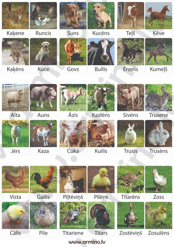 """Kartītes """"Dzīvnieki lauku sētā"""""""