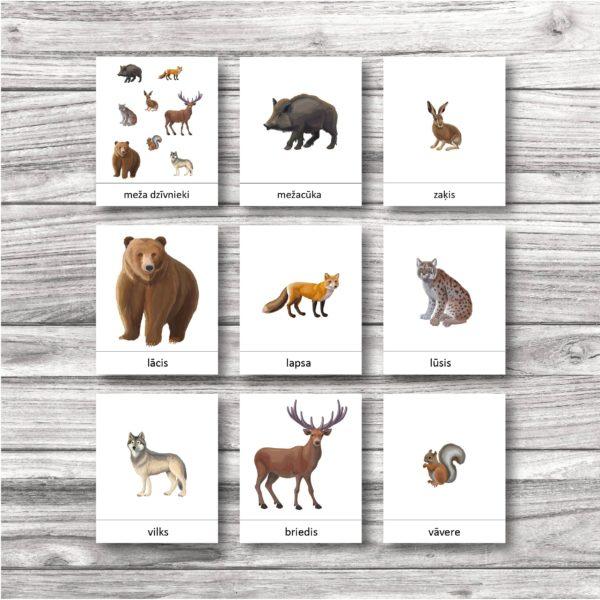 Meža dzīvnieku kartītes