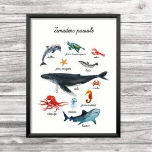 Zemūdens pasaules iemītnieku plakāts