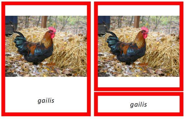 Dzīvnieku ģimenes – 4 dažādi fonti par 1 cenu