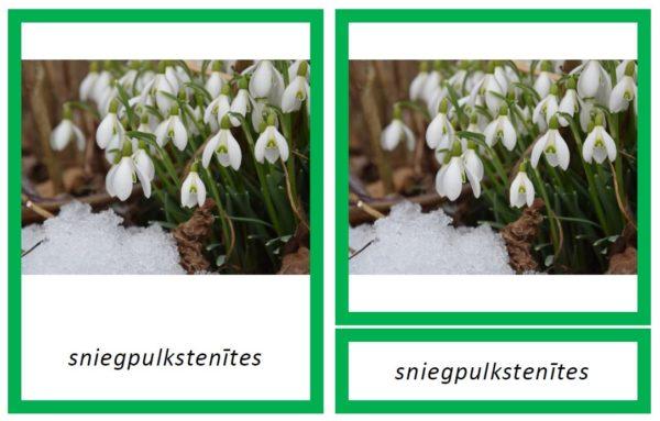 Pavasara ziedi – 3 fonti par 1 cenu