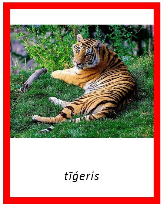 Savvaļas dzīvnieki – 4 dažādi fonti par 1 cenu