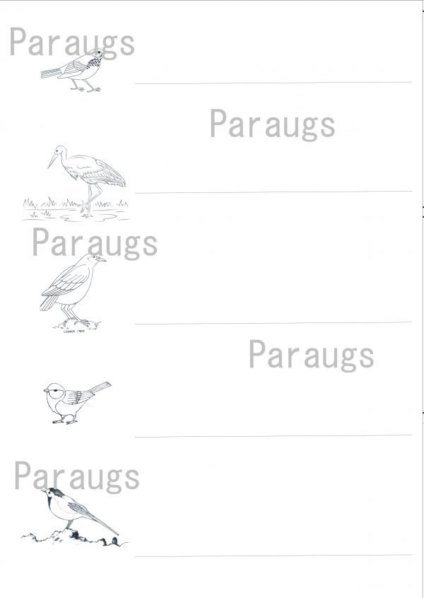 Putni – darba lapas + krāsojamās lapas