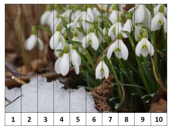 Puzle – Pavasara ziedi – skaitļu kombinācijas