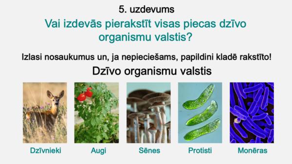 No kā sastāv organisms? (5. – 6. kl.)
