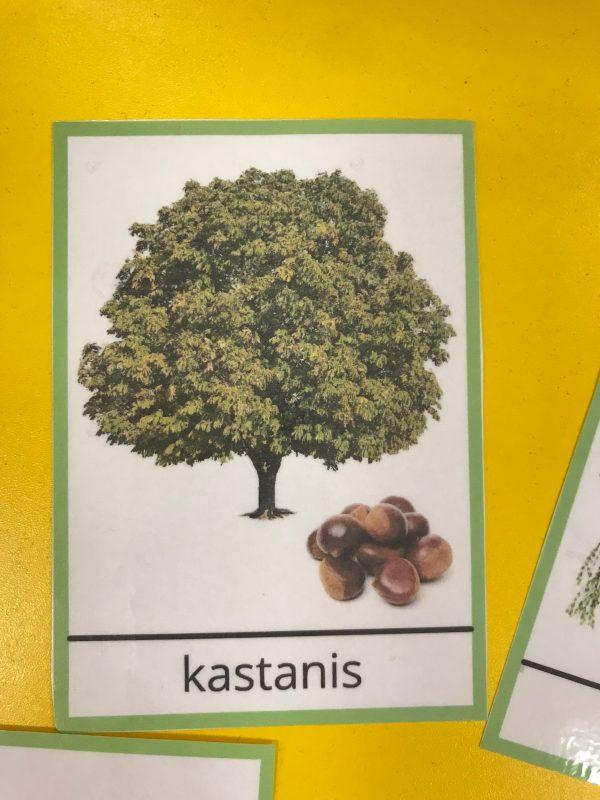 Latvijā augošo koku kartiņas