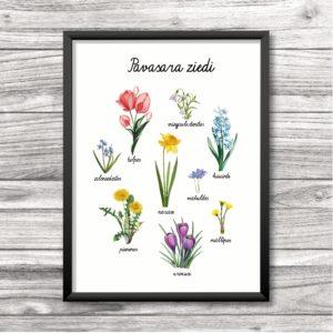 Pavasara ziedu plakāts