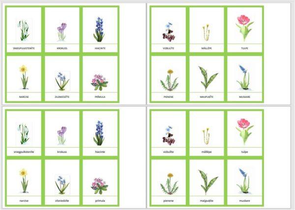 Pavasara ziedi