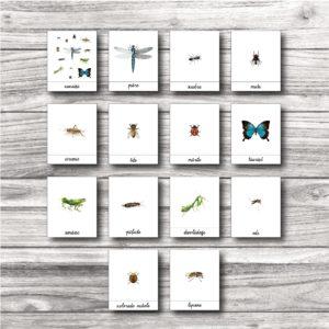 Kukaiņu kartītes