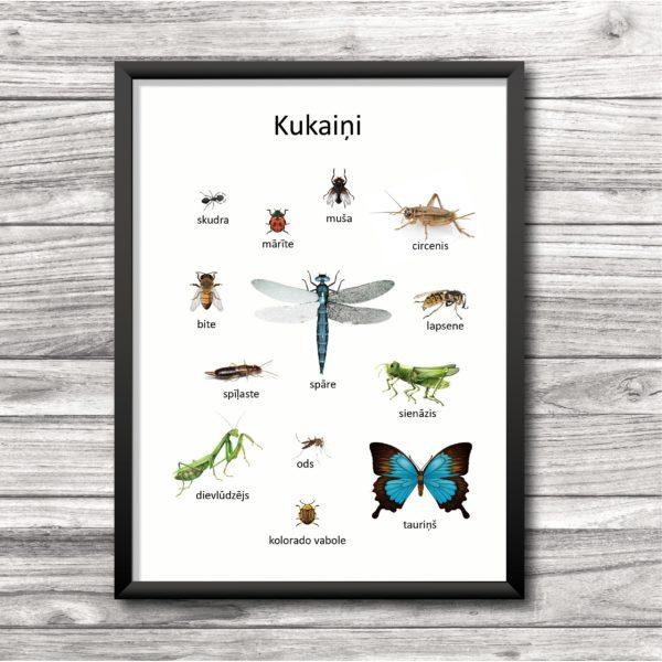 Kukaiņu plakāts