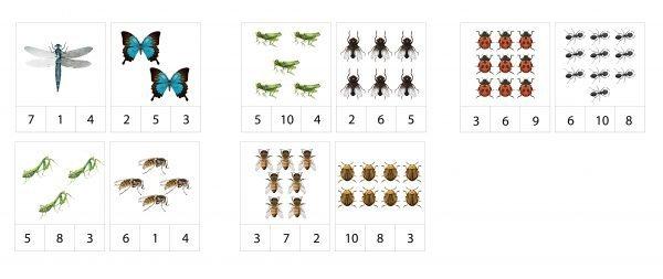 Knaģu kartītes – kukaiņi