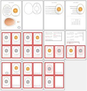 Olas uzbūve