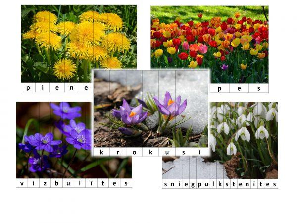 Puzle – Pavasara ziedi – saliec vārdu