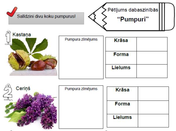 """Pētījums dabaszinībās """"Pumpuri"""""""