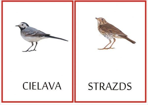 Putnu kartiņas A5