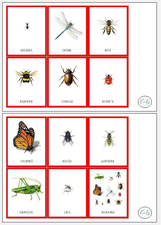 Kukaiņi