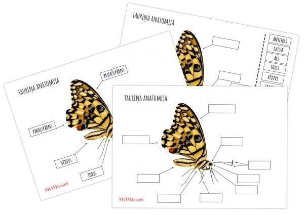 Plakāts/darba lapas – Tauriņa anatomija