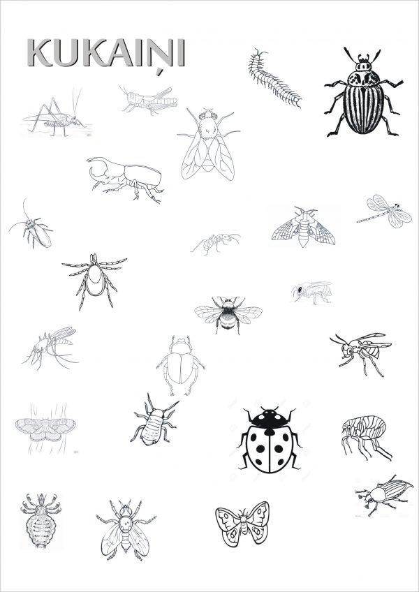 Kukaiņi – darba lapas