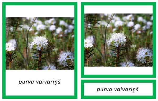 Indīgie augi Latvijā II – kartītes ar aprakstiem