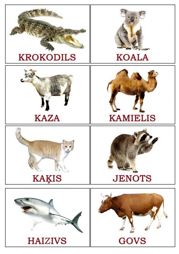 Kartiņas A7 formātā ar dzīvnieku attēliem