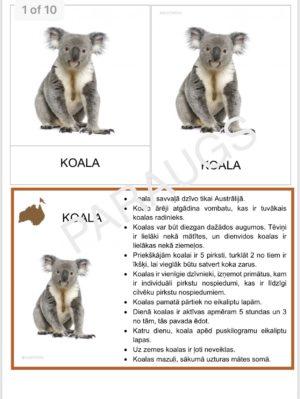 Austrālijas dzīvnieki un putni