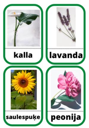 Kartītes lasīšanai (ziedi)