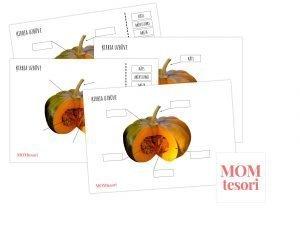 Ķirbis – Uzbūve – plakāts/darba lapas